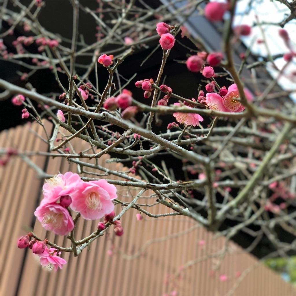 f:id:blossom-art:20200202172604j:image