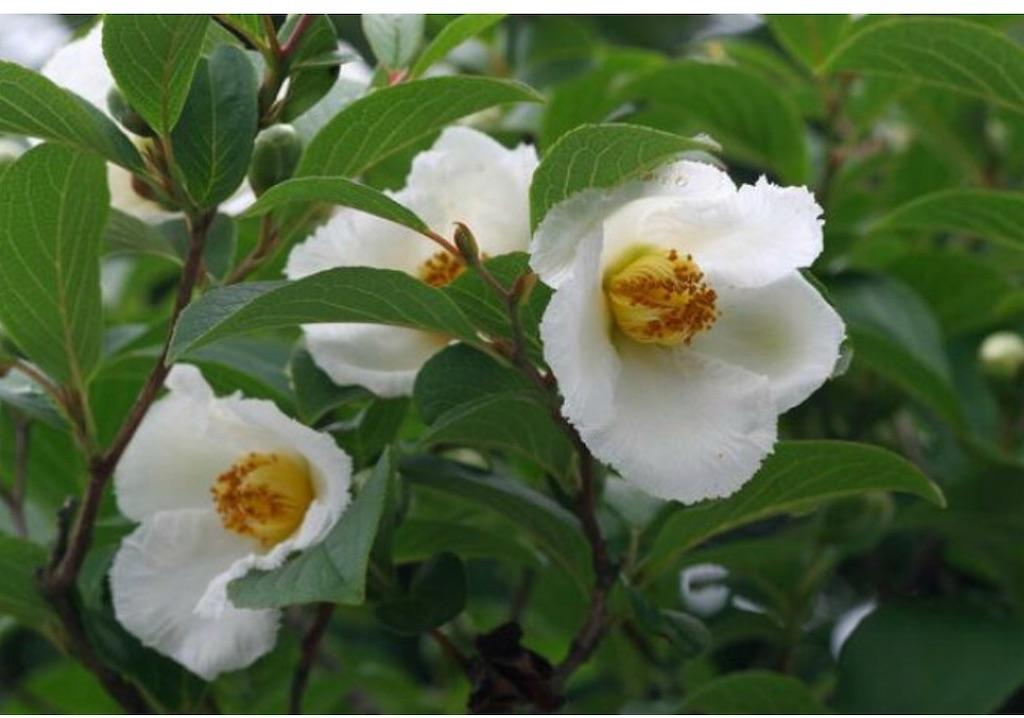 f:id:blossom-art:20200623170409j:image