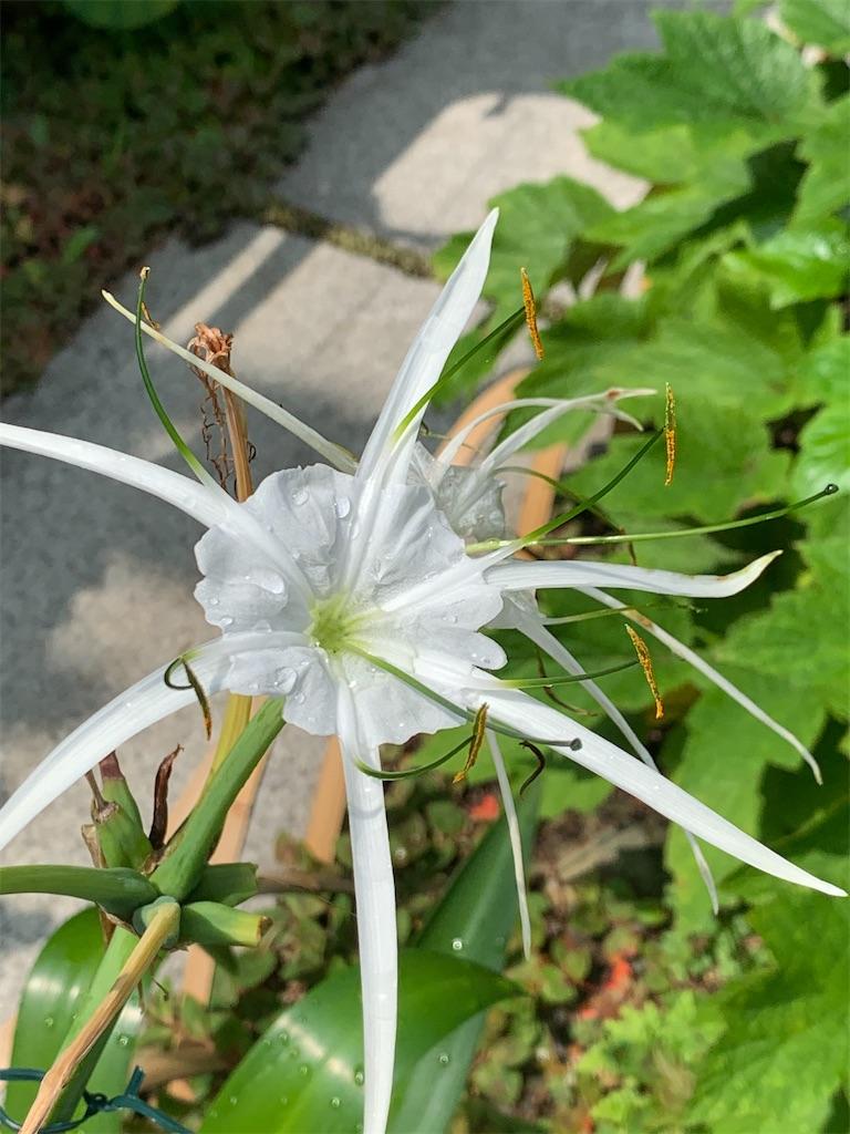 f:id:blossom-art:20200722185446j:image