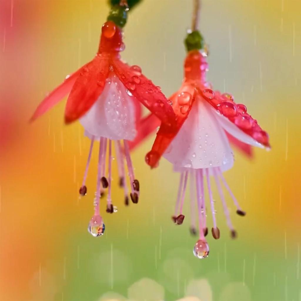 f:id:blossom-art:20200722194812j:image