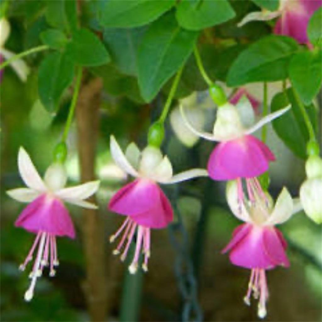 f:id:blossom-art:20200722194826j:image