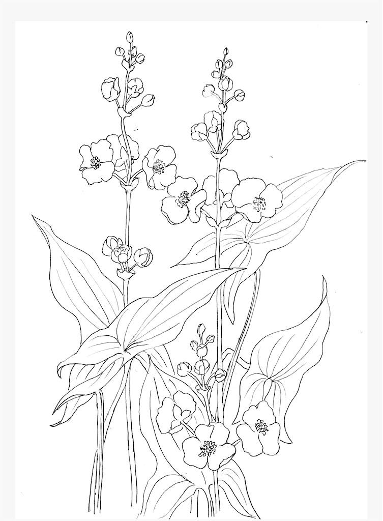 f:id:blossom-art:20200808235620j:image