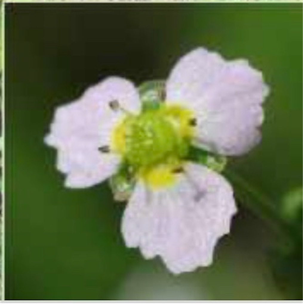 f:id:blossom-art:20200809000134j:image