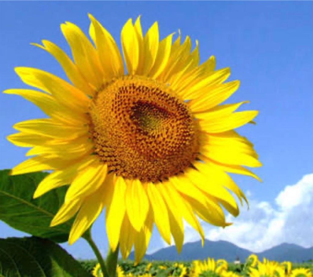 f:id:blossom-art:20200810204256j:image