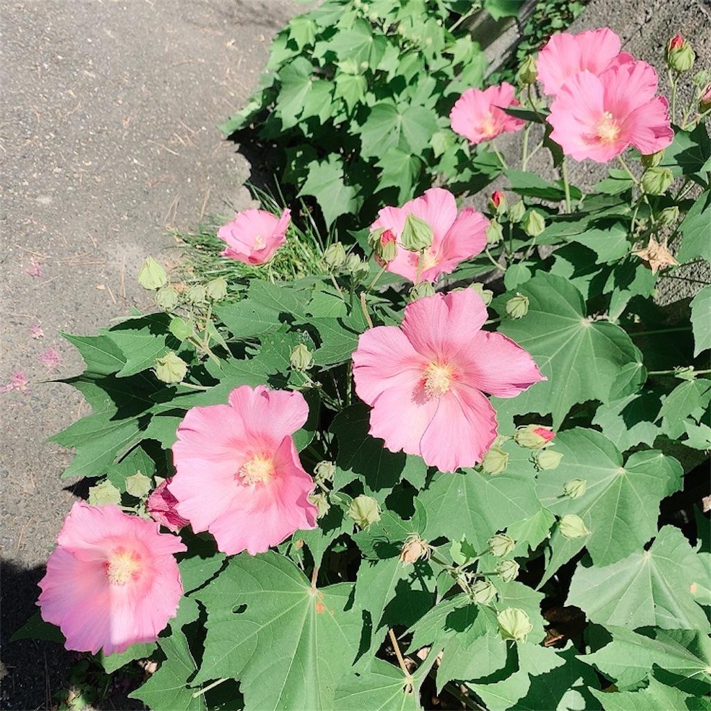 f:id:blossom-art:20200812181923j:image