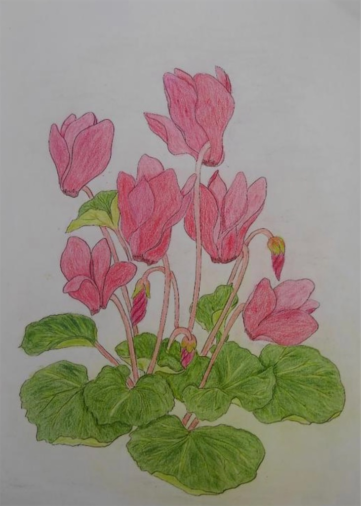 f:id:blossom-art:20210119162329j:image