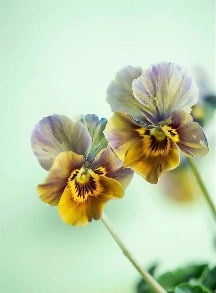 f:id:blossom-art:20210119163554j:image