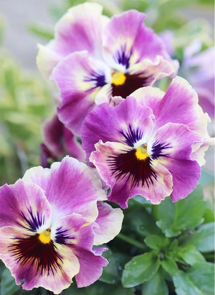 f:id:blossom-art:20210119163618j:image