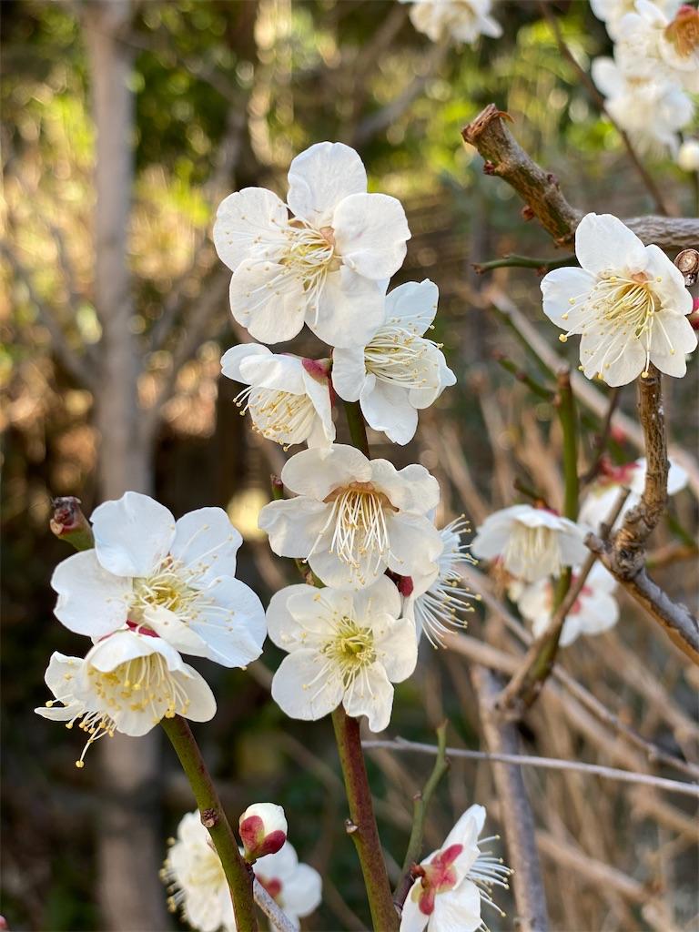 f:id:blossom-art:20210222174355j:image