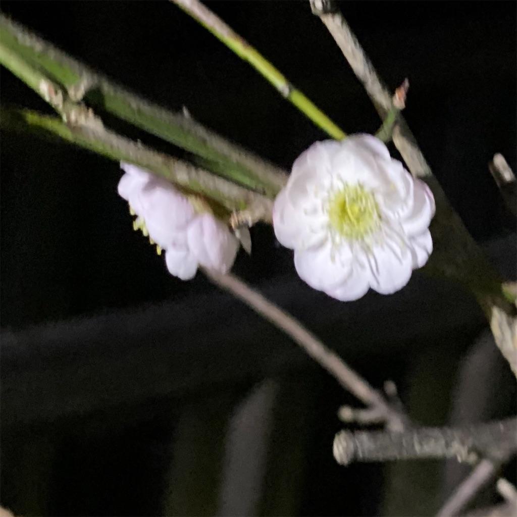 f:id:blossom-art:20210222234506j:image
