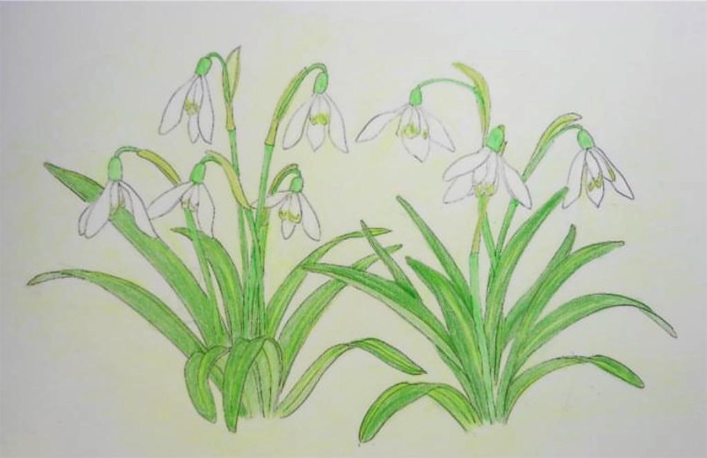 f:id:blossom-art:20210225200654j:image