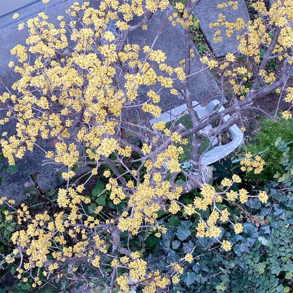 f:id:blossom-art:20210226180602j:image