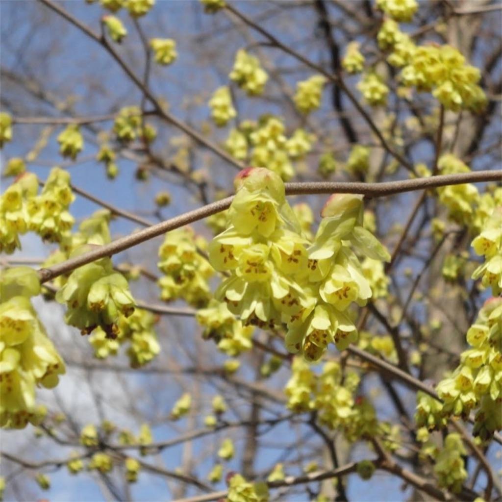 f:id:blossom-art:20210226180757j:image