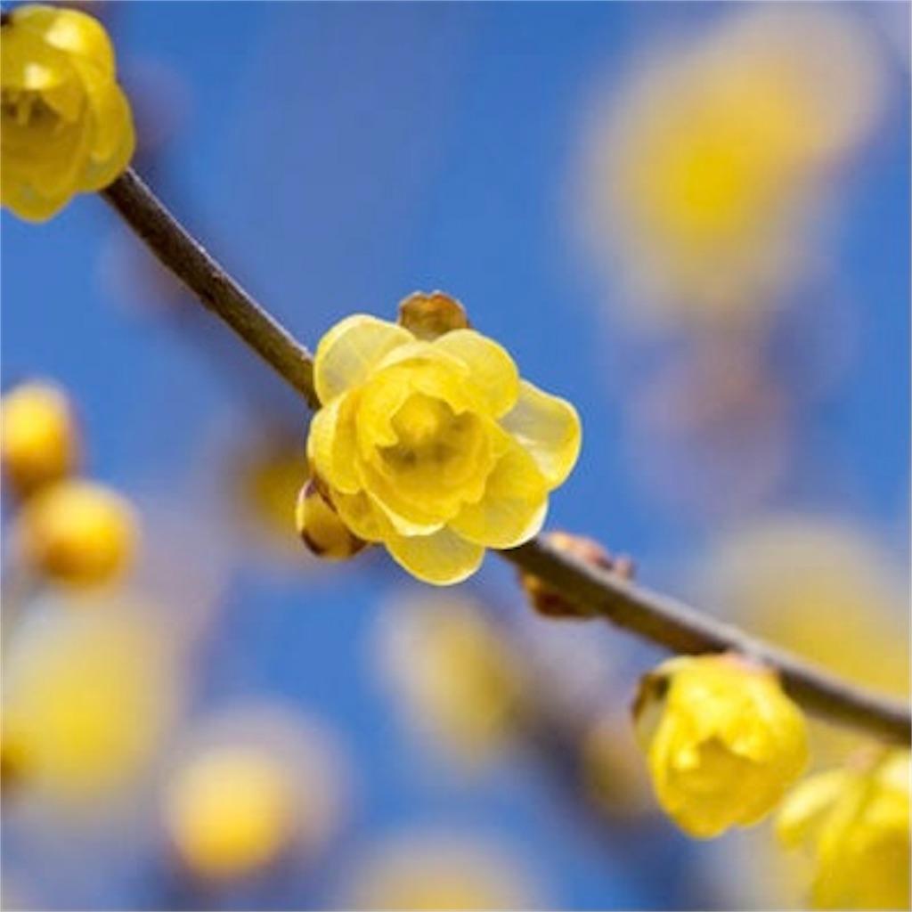 f:id:blossom-art:20210226180840j:image