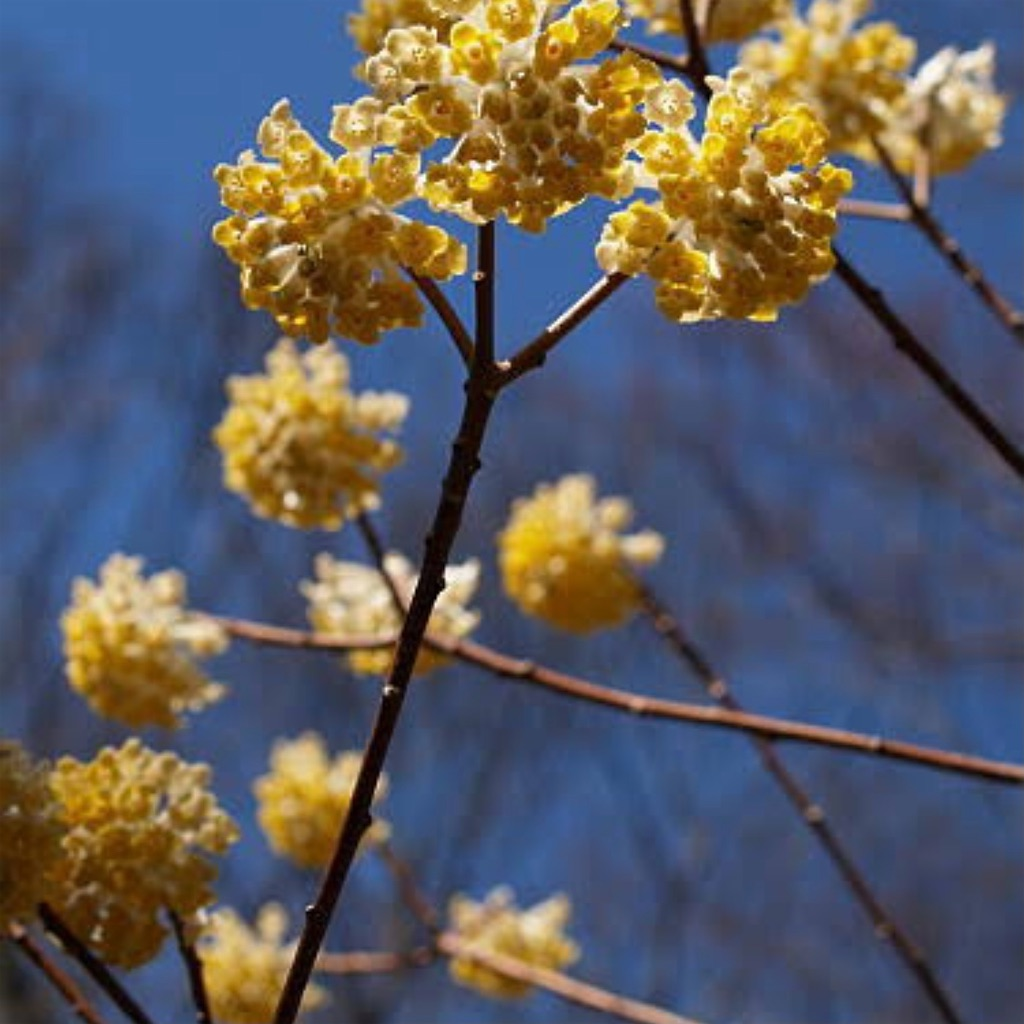 f:id:blossom-art:20210226181113j:image