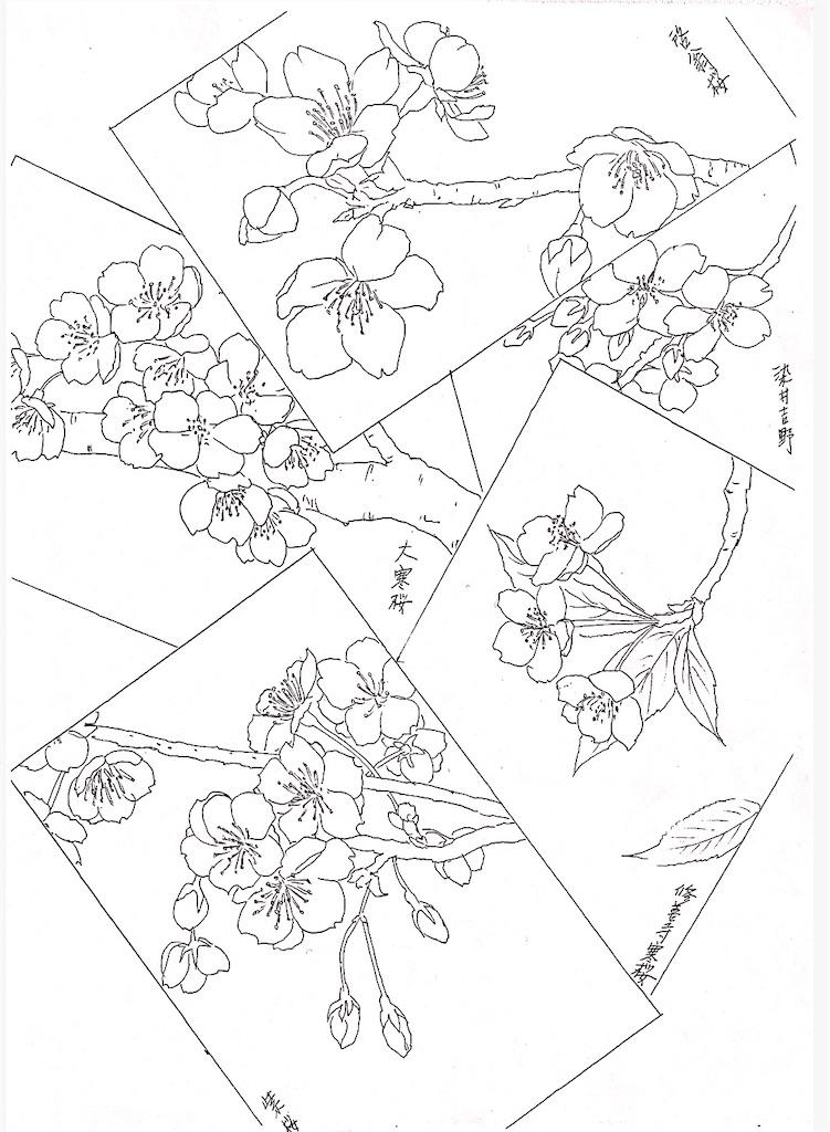f:id:blossom-art:20210227230154j:image