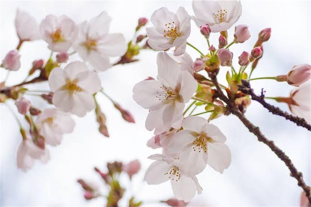 f:id:blossom-art:20210227230326j:image