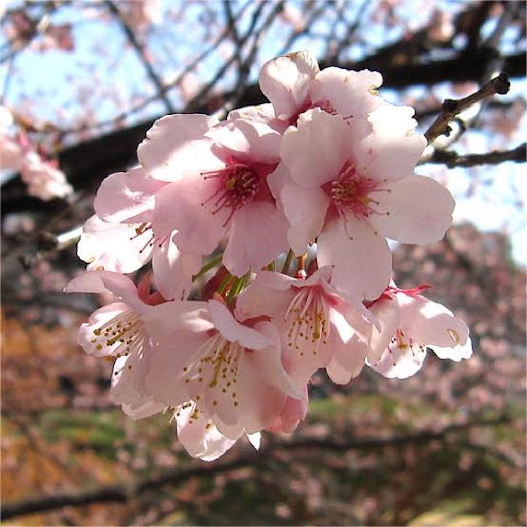 f:id:blossom-art:20210227230356j:image