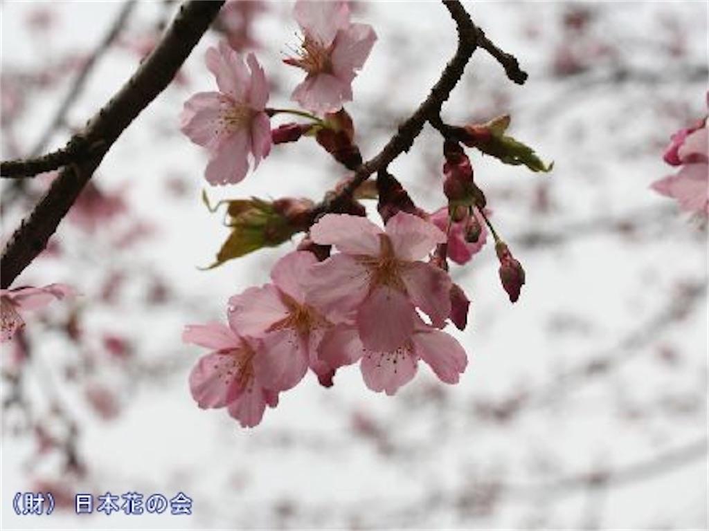 f:id:blossom-art:20210227230435j:image