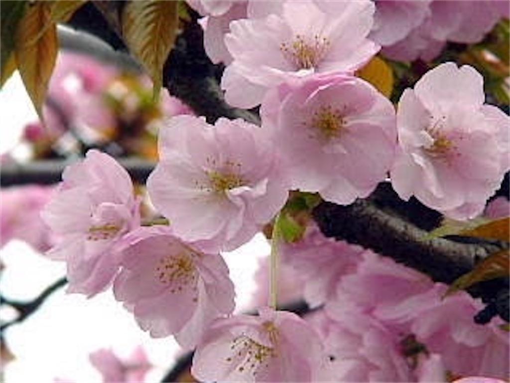 f:id:blossom-art:20210227230505j:image