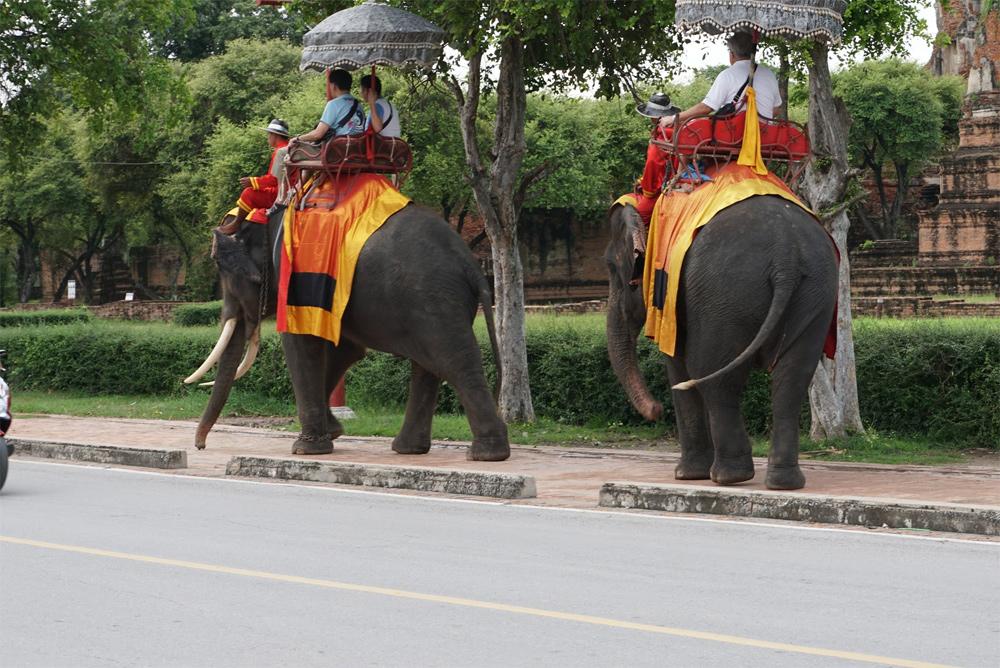 タイ旅行 象