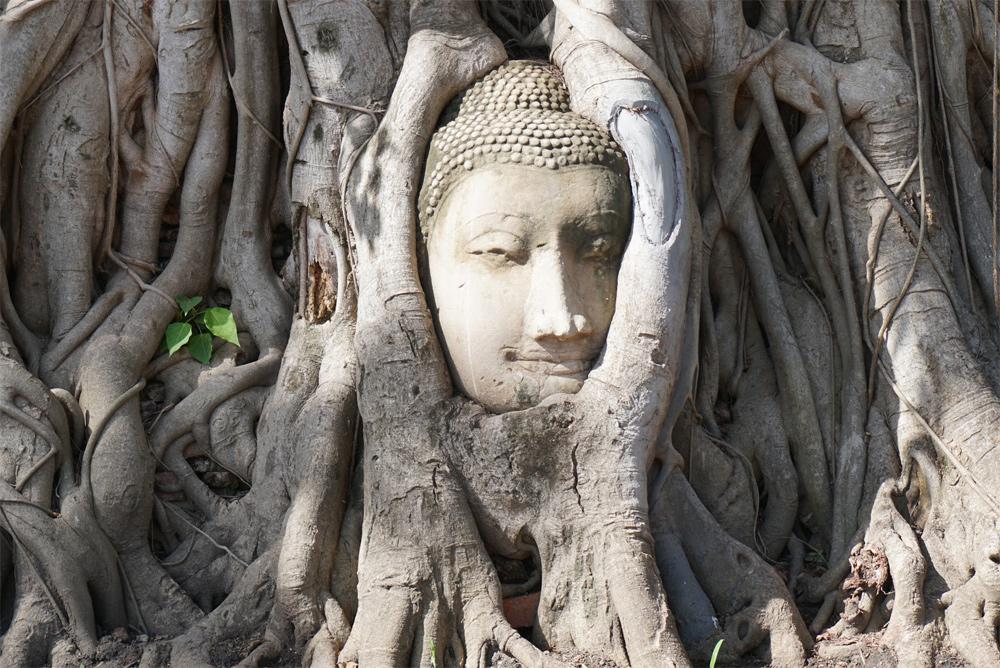 タイ旅行 木にくるまれた仏像