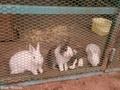 20171016 芦野公園ウサギ(五所川原市金木町)