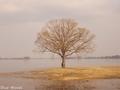 20180402 水没した樹木①(鶴田町廻堰)
