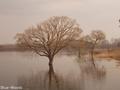 20180402 水没した樹木②(鶴田町廻堰)