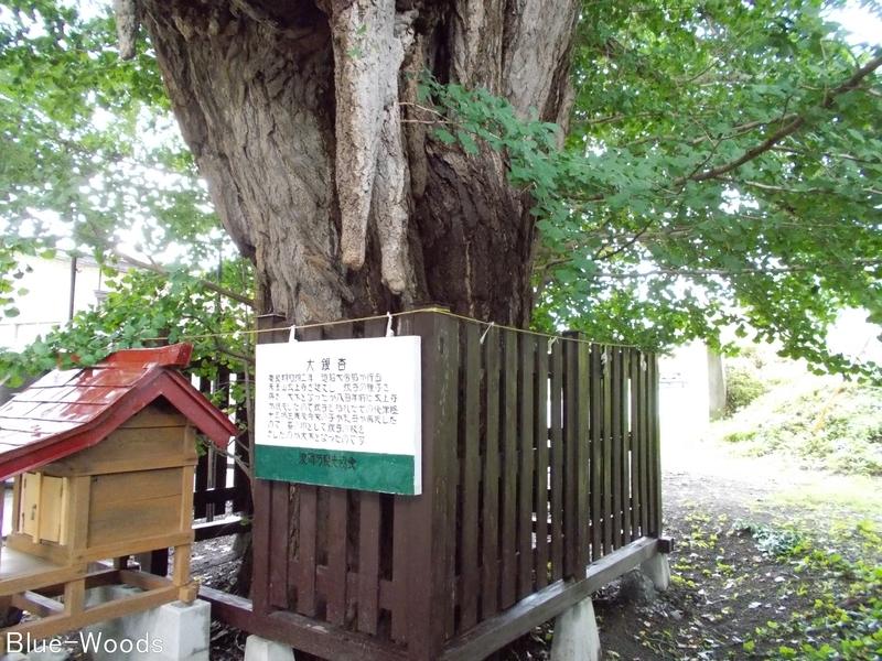 20180817 源常林の銀杏(青森市浪岡)