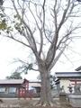 20180929 天満宮(つがる市木造花田)