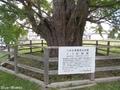 20180929 銀杏ヶ丘公園のイチョウ(つがる市木造千代町)