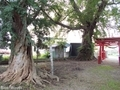 20180929 愛宕神社のハルニレ サイカチ(板柳町石野)