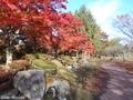 20181107 猿賀公園(平川市猿賀)