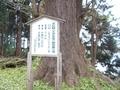 20181127 沼崎観音のイチョウ(東北町大浦)