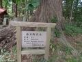 20190606 立野神社 セン(ハリギリ)(五所川原市金木町)
