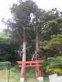20190606 磯崎神社(五所川原市金木町)