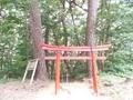 20190606 磯崎神社 アカマツ(五所川原市金木町)