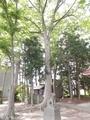 20190611 三社神社(平川市日沼)