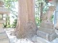 20190613 白山姫神社のスギ(五所川原市戸沢)