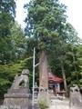 20190716 中野神社の大杉 拝殿前(黒石市南中野)