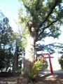 20191016 八幡宮のイチョウ(板柳町常海橋)