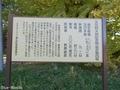 20191105 新舘神社のイチョウ(東北町新舘)