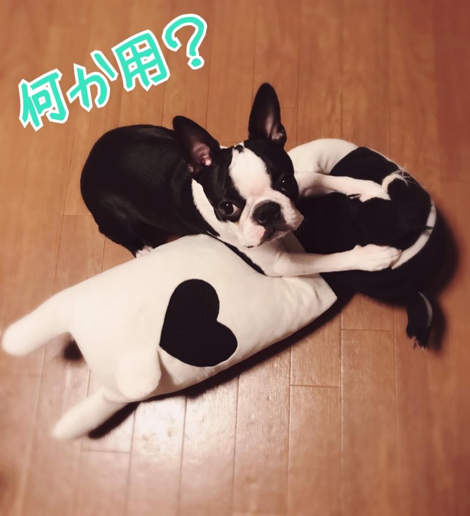 f:id:bluebluerbluest-tanikawa7:20170127103041j:plain