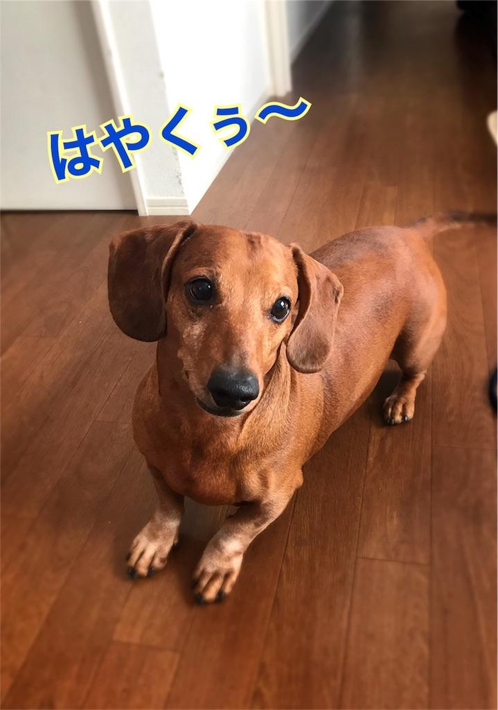 f:id:bluebluerbluest-tanikawa7:20170212225200j:image