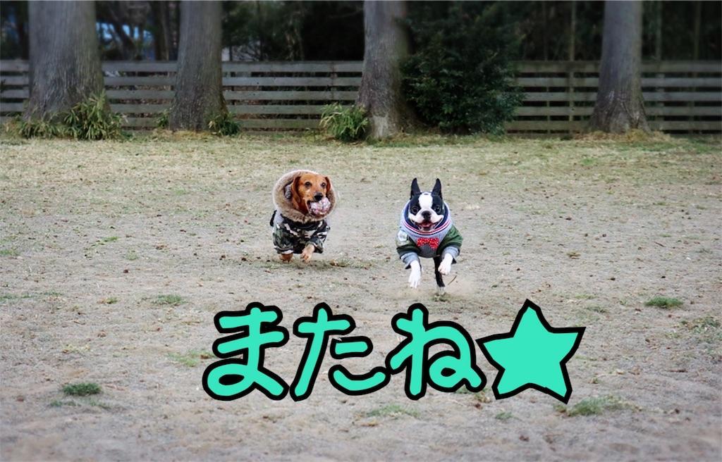 f:id:bluebluerbluest-tanikawa7:20170315083911j:image