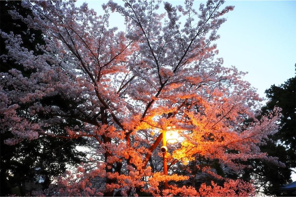 f:id:bluebluerbluest-tanikawa7:20170413223432j:image