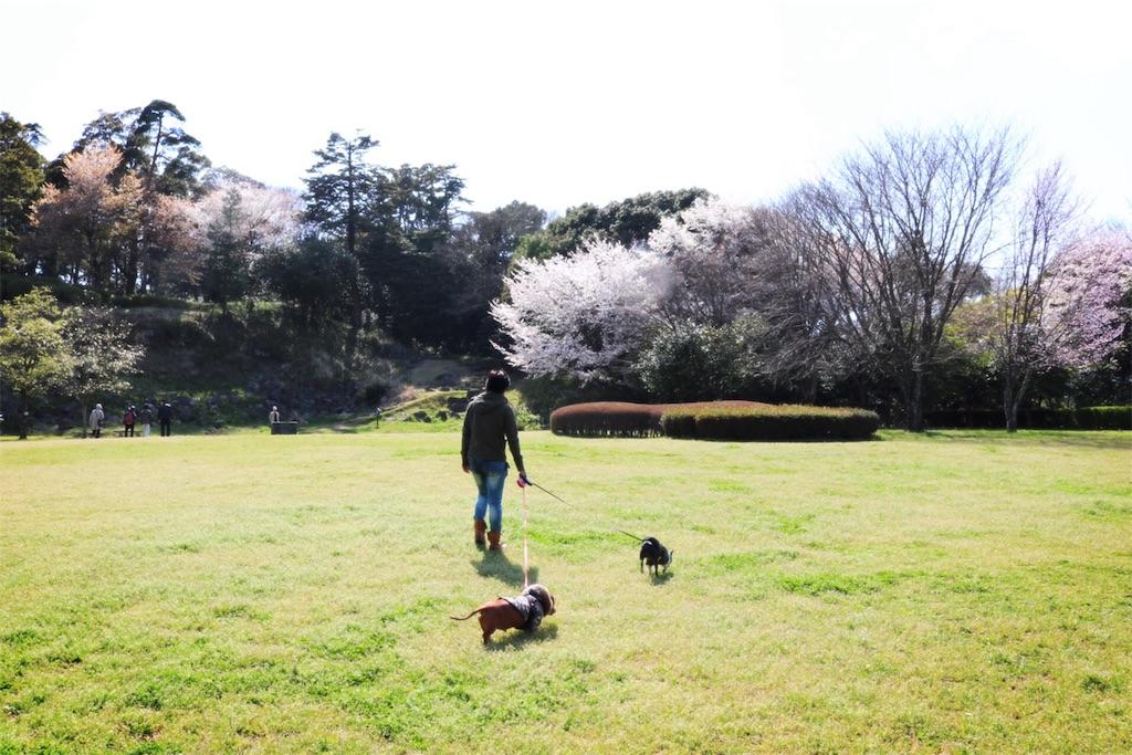 f:id:bluebluerbluest-tanikawa7:20170414102210j:image
