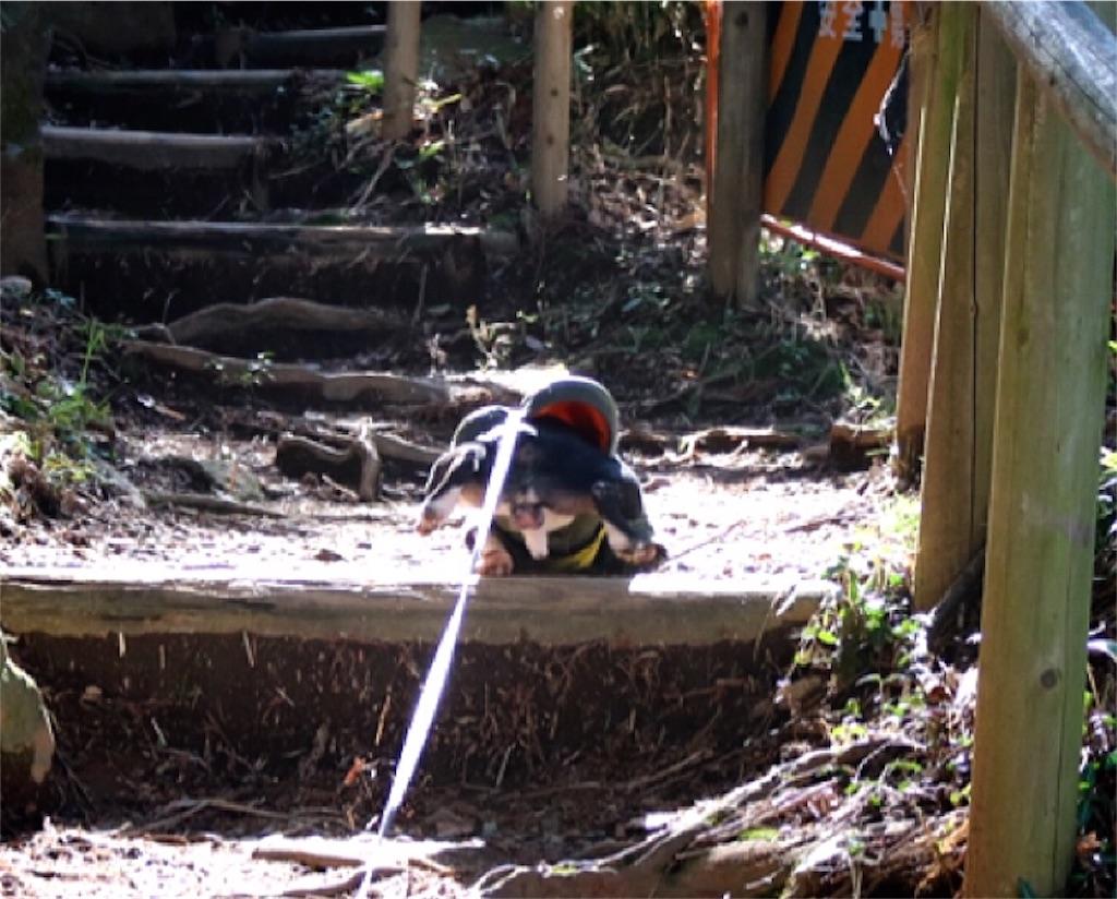 f:id:bluebluerbluest-tanikawa7:20170414103157j:image
