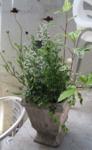 f:id:bluecafe:20100704112137j:image